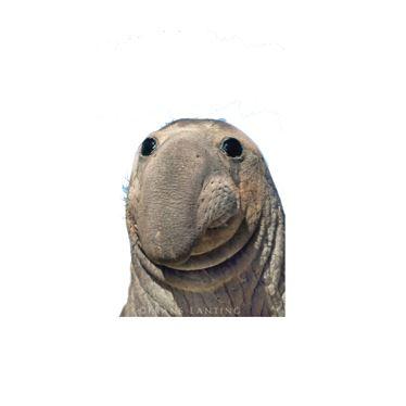 פילי הים פודקאסט