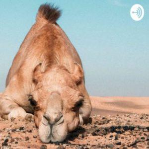 השבוע במזרח התיכון